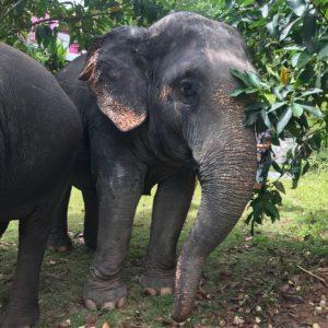 Ferie på Phuket